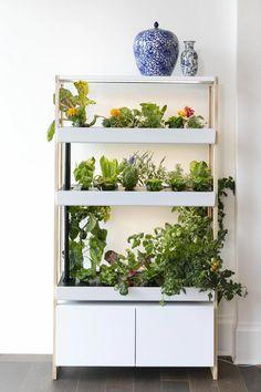 Single Smart Indoor Garden by Rise Gardens Indoor Hydroponics, Indoor Farming, Indoor Vegetable Gardening, Hydroponics System, Gardening Tips, Fast Growing Plants, Growing Gardens, Large Plants, Cool Plants