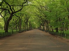 Central Park Poets Walk...one of my most favorite places in the world to be...Central Park is one of best things about living in NYC
