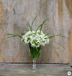 hauptsache keramik: Homöopathie für die Rosen