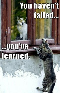 Growth Mindset Memes: English: You haven't failed ... you've learned.