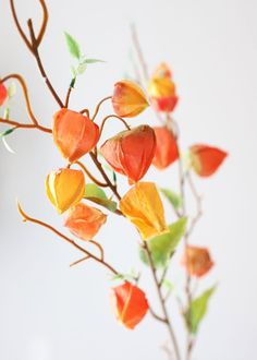 Find faux fall flowers for your DIY autumn floral arrangements, like this beautiful orange yellow artificial Japanese lantern fake flower spray. Sure to give your designs a distinct look. Autumn Orange Yellow Tall Silk Browse All Fall Flowers Fake Flowers, Orange Flowers, Artificial Flowers, Beautiful Flowers, Bittersweet Vine, Orange Lanterns, Thank You Pictures, Fall Flower Arrangements, Flower Spray
