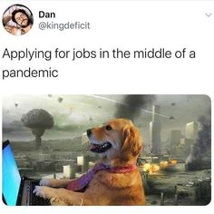 Stupid Funny Memes, Funny Relatable Memes, The Funny, Funny Laugh, Funny Shit, Funny Stuff, Jokes For Kids, Dad Jokes, Funny Dog Pictures