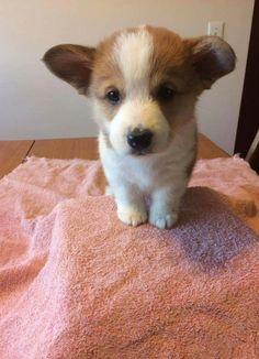 Foster baby.http://ift.tt/2GxxKQk