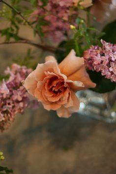 紅茶色のバラのジュリア