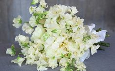 In this dreamily romantic wedding bouquet, Paul Thomas, florist to The Ritz hotel in London, has used cream sweet peas, 'Mother's Choice' peonies and Viburn