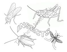 Insect Science Pack from Tenacity and Teaching on TeachersNotebook.com -  (6 pages)  - Parts of an Insect Science Resources - Early Childhood