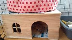 Matériel pour mon lapin (nourritures, maisons, jeux) - Mon lapin câlin