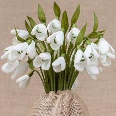 Snowdrops Bouquet - Crepe Paper Flowers - Paper Flower - Anniversary - Spring Flowers - Wedding - Birthday Gift - Mother's Day - Home Decor 3d Paper Projects, Paper Crafts, Plant Tattoo, Christmas Nail Art Designs, Crepe Paper Flowers, Flower Photos, Beautiful Flowers, Floral Design, Bouquet