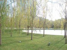 Parque de Poblenou:projeto de Jean Nouvel.Barcelona.  Detalhe da vegetação.  foto:kaki afonso.janeiro de 2009