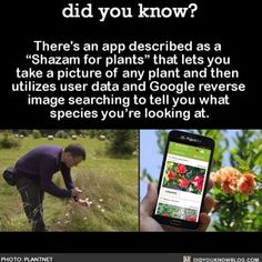 A plant identifying app for your green thumb.... http://www.collective-evolution.com/2016/03/10/the-shazam-for-plants-will-identify-any-plant-from-a-picture/
