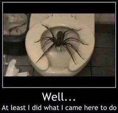 19 Reasons Why Arachnophobes Should Give Australia A Miss nope not going to Australia like ever!!!!!