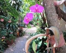 Secret south Florida gardens revealed. Great slide show in article.