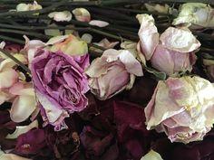 Cabbage, Vegetables, Garden, Artist, Garten, Lawn And Garden, Artists, Cabbages, Vegetable Recipes