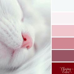 Nice pink and white color palette Pink Color Schemes, Colour Pallette, Color Combos, Pink Palette, Color Balance, Cat Colors, Color Swatches, Color Theory, Color Patterns