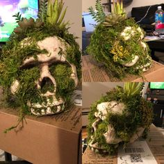 Skull for my first ever Halloween terrarium. 😊 I will update when the set up is finished, if anybody is interested. Halloween Veranda, Casa Halloween, Halloween Porch, Holidays Halloween, Halloween Crafts, Halloween Skull, Victorian Halloween, Dollar Store Halloween, Diy Halloween Decorations For Your Room