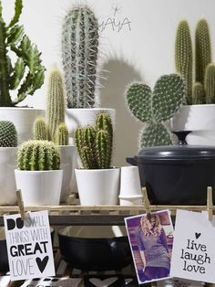 Office Plants Why the cactus is the ultimate office plant Succulent Terrarium, Cacti And Succulents, Planting Succulents, Planting Flowers, Cacti Garden, Green Garden, Cactus E Suculentas, Harmony Design, Cactus Plante