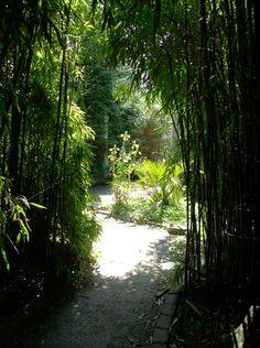 Een glimp in het bamboebos