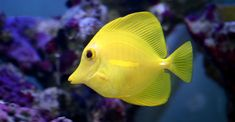 Marine Fish Hd Pictures 4 HD Wallpapers
