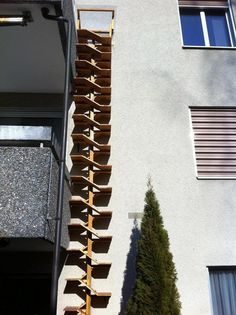 Cat walks, ladders and spaces on Pinterest | Cat Shelves, Cat Walk ...