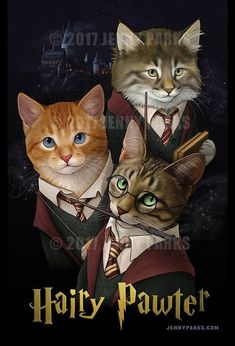 Two favourite things:Harry Potter&The Warrior cats Harry Potter Cat, Harry Potter Books, I Love Cats, Cute Cats, Funny Cats, Adorable Kittens, Warrior Cats, Crazy Cat Lady, Crazy Cats