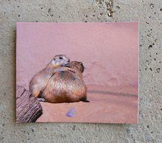 Prairie Dog Magnet Photo Friend. $4.00, via Etsy.