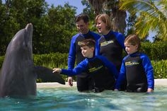 Dolphin Experience at the Miami Seaquarium - Miami | Viator