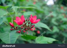 Little Red Flower in the Field Wallpaper
