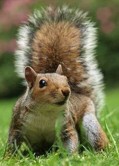 ❤ Squirrel
