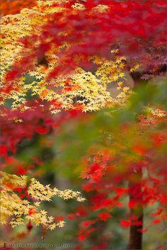 Fall,Colour Collaboration,Jindai Botanical Garden #Tokyo #Japan