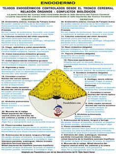 Órgãos do tronco cerebral Nova Medicina Biológica ontogenético 3 Sistema de Lei de Hamer