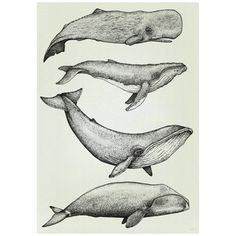 This stunning hand drawn Whale Print ismade up of hundreds of tinydots.  Printed on tintoretto paper.  Comes in A4 and A3.