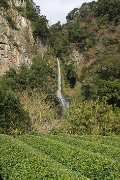 高千穂コース_音の谷の滝
