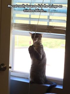 I have to yell at all 4 of mine on a regular basis to leave the damn blinds alone