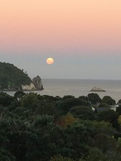Coromandel: la spiaggia di Hahei, Cathedral Cove e Hot Water Beach Auckland, Vegan Food, New Zealand, Cathedral, Places To Visit, Sunset, World, Beach, Hot