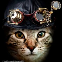 Steampunk cat with hat and goggles. I don't have a cat, but maybe my dog would wear this on Halloween.