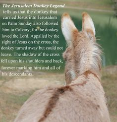 Image result for donkey cross on back photo