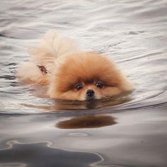 Lol how cute a swimming pom pom