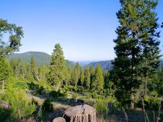 Need a little peace and quiet in your life? Here are 15 small towns in Northern California that will bring you a lot of that! Twain Harte, Stuff To Do, Things To Do, Future Travel, Mountain View, New Hampshire, Northern California, Small Towns, Wyoming