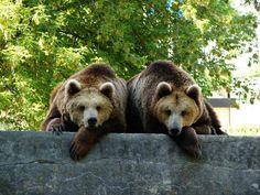 ...z zamojskiego  Zoo