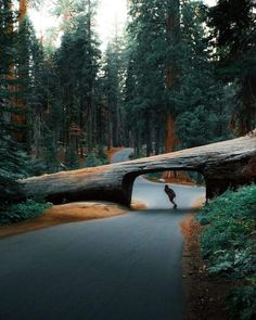 This is my new extreme sports compilation video (Supertramp Style) [HD] Freestyle/BMX/Snowboard/Motocross/Wingsuit/Longboard/Skateboard. Sequoia National Park California, Destinations, Voyager Loin, Longboarding, Blog Voyage, California Travel, Visit California, California Beach, Land Scape