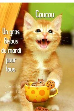 Bon Mardi Humour, Messages, Poster, Diy, Animals, Buen Dia, Happy Tuesday, Good Friday, Good Night