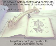 It just makes sense to ensure that your nervous system is functioning at its full potential!