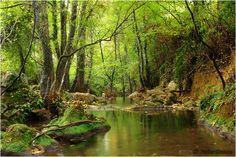 Bosques y agua, maravillosa naturaleza.