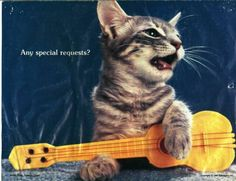 Cat with uke. Presumably a left-handed cat (or should that be left-pawed?)