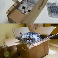 Yet more cats in boxes