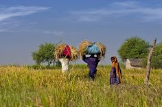indigenous people of pakistan | The very indigenous people of Pakistan