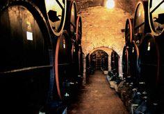 Sudové víno.Zákon také poprvé jasně definuje, co je falšování vína. Jde o použití výrobních postupů, které jsou v rozporu s evropským právem