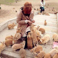 Japans rabbit island