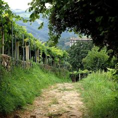 Sometimes all you need is a quiet walk through the vines. #ExploreMore   #adventure #adventurelife #travelgram #instatravel #wanderlust #doyoutravel #bestvacations #ourplanetdaily #travelbug #outdoorlife #gooutandplay #vineyard #vines #wine #winelover #hiking #Spain #spanishwines #rioja