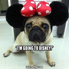 Minnie Pug - Join the Pugs
